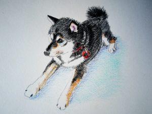 日本犬 イラスト